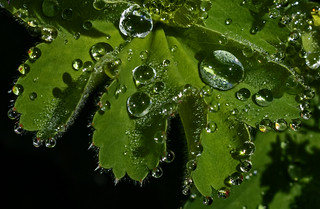 Many Dew Drops in a Row