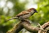 some birds tenby
