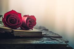 Two roses (Ro Cafe) Tags: redroses roses stilllife arrangement blooms book flowers romantic setup arramgement wood table tabletop rustic backlight nikkormicro105f28 nikond600