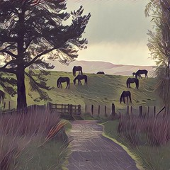At the end of the path there's the end of the day 🐎🌳🌲🐎🌳🌲🐎 (kevinmcnair) Tags: scotland perthshireandkinross kinross perthandkinross lochleven lochlevennaturereserve naturereserve horses cyclingscotland theochils path pathways track poems