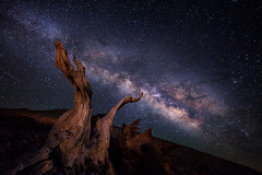 Lift | Bristlecone Pines, California (v on life) Tags: bristleconepines california bristlecone milkyway longexposure night stars starrynight surreal