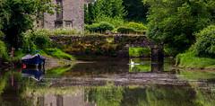 Penpoll, Cornwall (Peter Quinn1) Tags: muteswan penpoll reflection cornwall riverfowey fowey bridge rowingboat
