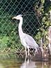 101_0413 (Elisabeth patchwork) Tags: bird reiher heron wildlife vienna wasserpark floridsdorf