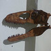 Dippy on Tour - Gas Hall, Birmingham Museum & Art Gallery - skulls - Tyrannosaurus skull, model