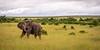 What a wonderful Animal, at the wonderful Masai Mara (Markus Jaschke) Tags: afrika kenia mara masai