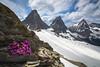 Whitetail Wonder (Darren Umbsaar) Tags: mountains mountain whitetail peaks peak ridge summit snow hike kootenay bc rockwall