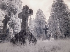 Cross (4foot2) Tags: cross graves gravestone graveyard tomb tombstone brookwoodcemetery brookwood cemetery infrared infraredfilter wideangle highpassfilter lowpassfilter lowpass highpass 2018 fourfoottwo 4foot2 4foot2flickr 4foot2photostream