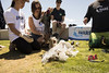 Straw Week Event (Project AWARE Foundation) Tags: projectaware diveagainstdebris newportbeach