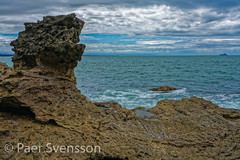 Tauranga, New Zealand - January 15, 2018:  Lava formations in Mount Maunganui (per.svensson@mac.com) Tags: tourist sightseeing mountmaunganui tree travel hiking newzealand tauranga tourism bayofplenty nz 2018 natural landscape vacations seashore cliffs water background holidayevent waves volcano footpath hawkes outdoors family kiaora mountain oceania rock hike climbing summer historic spectacular nature bay seascape formation scenic hill picturesque sea reserve rockformation january idyllic scenery beautiful summertime mauao pacificocean noperson sky green hawkesbay cliff dramatic
