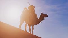 Assassin's Creed® Origins (Riservin) Tags: playstation ps4 desert camel sand sky sun