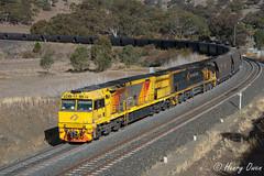 Aurizon down Ardglen (Henry's Railway Gallery) Tags: 5029 5001 5020class 5000class ge diesel goninan ugl coaltrain freighttrain wc907 ardglen aurizon