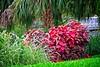 Foliage Splendor (LarryJay99 ) Tags: washedashore mountsbotanicalgardens litter trash refuse plastics art arts artcraft foliage green greenery leaves plants palmbeachcounty