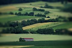 height and depth (mags_Tag) Tags: feld felder niederösterreich österreich landschaft grün zöfing judenau agricultural agriculture farm farmland verde vert bauernhof ackerboden crops farmhouse tiltshift austria