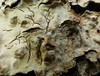 Dried up old face..x (Lisa@Lethen) Tags: lichen dry cracked wrinkled face fungus nature weather tree woods macro