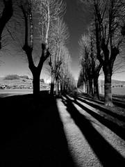 Mapello   - Bergamo  -  winter shadows (amos.locati) Tags: amos locati mapello bergamo winter shadows lombardy north italy ombre