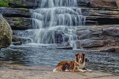 Kyra (mcvmjr1971) Tags: nikon d7000 parque estadual tres picos nova friburgo cachoeira dos frades waterfall border collie travel diego 2018