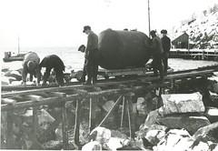 AiN.NA074.0041 (Arkiv i Nordland) Tags: norcem nordland portland cementfabrik 100 år jubileum kjøpsvik arkiv vinter snø