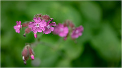 Flower Power . (:: Blende 22 ::) Tags: germany deutschland flower blumen pink macro canoneos5dmarkiv color farben spring frühling ef2470mm f28l ii usm ef2470mmf28liiusm