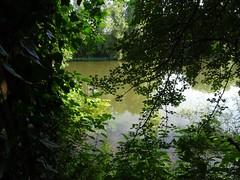 Riverside Walk high tide 2 (Phil Gayton) Tags: water tree foliage reflection riverside walk river dart totnes devon uk high tide green