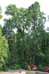 Київ, Ботанічний сад імені Фоміна Ukraine InterNetri 19