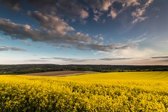 Rapeseed Field - Kent (E_W_Photo) Tags: rapeseed field canola yellow kent canon 80d sigma 1020mm leefilters