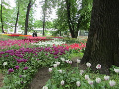 in Botanic garden (VERUSHKA4) Tags: botanicgarden vue view trunk tulip coloured color different canon europe russia moscow ville city cityscape day may people girls spring springtimes primavera printempes fleur flora beautiful blossom path two