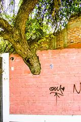 Préserver la nature! (dominiquita52) Tags: tree arbre wall mur mexique