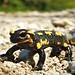 Salamandre... Salamander... #darktable #FujiX-S1