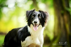 Trust love (Magic Dogs Photography - Elisa Pirat) Tags: trustlove dog pets photography animal chien bordercollie berger forest foret bokeh light animalier canin animauxdecompagnie doglover petsphotography nikon