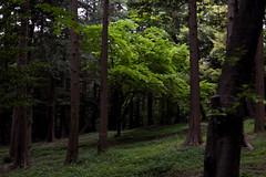 Izuminomori park(泉の森) (daigo harada(原田 大吾)) Tags: view landscape yamato izuminomori park forest
