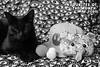 blog header (House Of Secrets Incorporated) Tags: loa cat blackcat havanabrown cats pets animal animals monochrome blackandwhite grayscale 6dokidoki teddybear passcase sebastianmasuda primark beautysponge sponge hat bioworld disney starwars