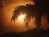 Jurassic Sunset (LUSEJA) Tags: luseja parana powershot entrerios argentina sol sunset dino palmtree silhouette sun s5