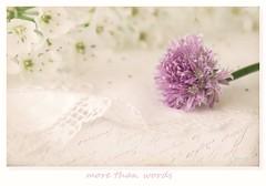 More than words (c.ferrol) Tags: flor malva tonos pastel blancos violeta bokeh suave carta letras palabras