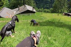 ma soeur qui sniffe des fleurs, Nasco et mes pieds (bulbocode909) Tags: valais suisse mex lachaux montagnes nature forêts arbres chalets chiens personnes vert printemps