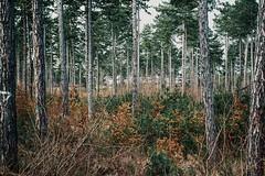 grounding 🌿 (lina zelonka) Tags: arnstadt germany ilmkreis linazelonka thüringen thuringia thueringen thuringen deutschland forest wald woods trees nature landscape nikond7100 18140mm