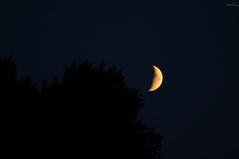 Crescent Moon Rising (Felicia Brenning) Tags: crescent moon rising luna måne nature sweden sony sonyalpha sonya57 sonyslta57