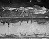 IMGP2157 (agianelo) Tags: wood paint chipped rough peeling cracked monochrome bw blackandwhite