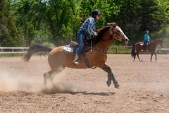 JBC_6397.jpg (Jim Babbage) Tags: krahc bethany appaloosa horses horseshow 2018