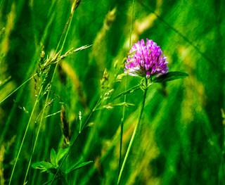 The Hay Field, Up Close.jpg