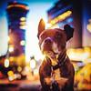 Eden (L'agriculteur Illuminé) Tags: eden dylan koller chien la chaux de fonds suisse animaux animal canon 5d mark iii night 50mm