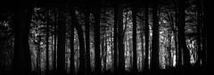 Woodland Panorama (paulbnashphotography.com - Sharpe Shooter) Tags: cornwall uk