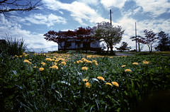 House on a hill (threepinner) Tags: house summer mamiya universal press sekor 50mm f63 positive selfdeveloped takikawa ebeotsu hokkaidou hokkaido northernjapan japan 江部乙 滝川 北海道 北日本 日本 dandelion