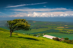 Lonely tree of Firle (lloydlane) Tags: firle sussex tree lonely clouds south downs national park beacon