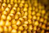 A Million Bananas? No, It is Jackfruit - All Natural (bp-122) Tags: macromondays allnatural tree fruit largest worlds sweet healthy jackfruit texture pattern colour macro nikkor