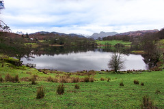 Loughrigg Tarn & Langdale Pikes (StevePilbrow) Tags: loughrigg tarn national trust langdale pikes lake district park cumbria lakes north west england country side water walking trees hill pike nikon d7200 nikkor 18105mm march april 2018