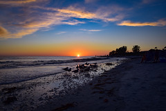 Winter Sunset - January 10 - Sanibel (Will-Jensen-2020) Tags: sanibelphotographer bird water sky sun beach sunset gulfofmexico gulf sancap sanibelisland sanibel florida usa