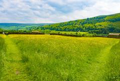 Wild Flower Meadows, Gunnerside, North Yorkshire (Kingsley_Allison) Tags: wildflowers meadows flowers gunnerside yorkshire yorkshiredale northyorkshire nikon nikond7200 nationalpark buttercups walks walkingboots keld stone barns