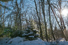 Winter Afternoon at Wild River State Park, Minnesota (Tony Webster) Tags: minnesota wildriverstatepark afternoon snow snowcapped snowcovered statepark sun trees winter centercity unitedstates us