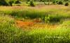 Wild Grass Field, Mud Bay Park, Surrey BC (PhotoDG) Tags: wild grass field mudbay nature landscape surrey metrovancouver lowermainland color park