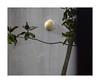 Paysage (hélène chantemerle) Tags: arbre branche feuilles mur lampe gris vert jaune géométrie lignes obliques ombre wall tree leaves lamp lines geometry grey gree yellow